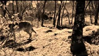 Metallica Of wolf and man (subtitulado en español)