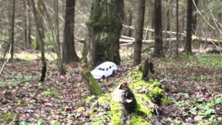 rc jeep grand cherokee wj fist outdoor test