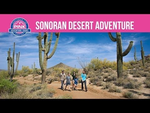 Pink Adventure Tours | Sonoran Desert Adventure | Pink Jeep Tours