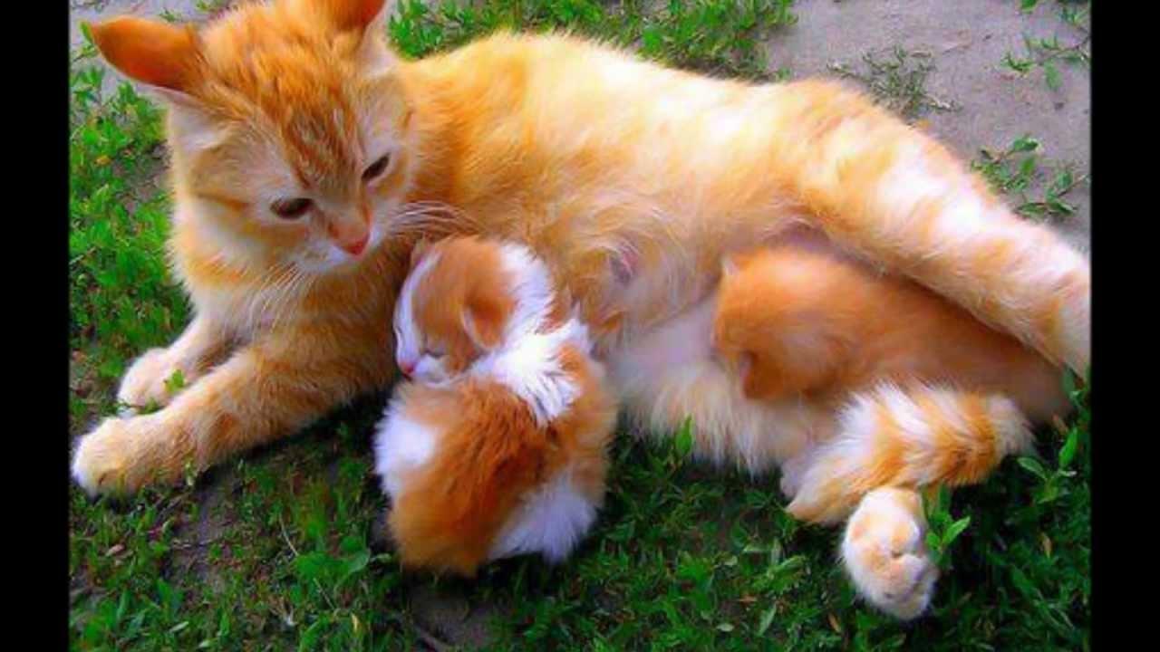 Gatti simpatici e teneri youtube for I gattini piccoli