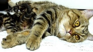 Mom is everything! Cutest cat ever!