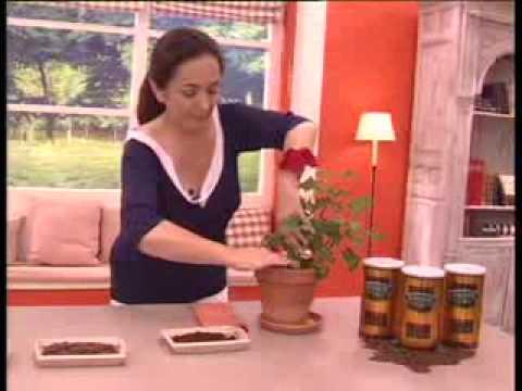 """La Botica """"Cuida Tu Vida"""": Café, un abono para las plantas"""