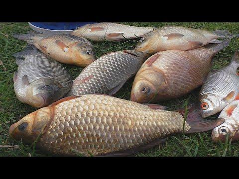 Рыбалка  Ловля  в полводы  2020г .My fishing