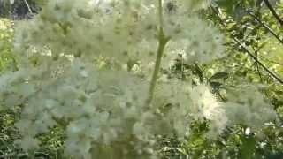 Тайга непроходимая и сказочная / Красивые виды на тайгу