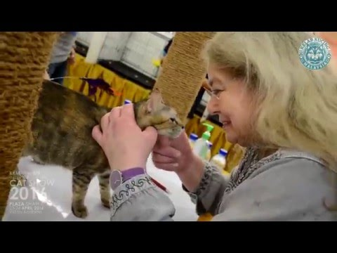 KKM \ Fife \ Brit International Cat Show 2016 @Plaza Shah Alam