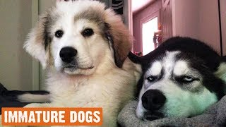 Cute Immature Dogs Moments