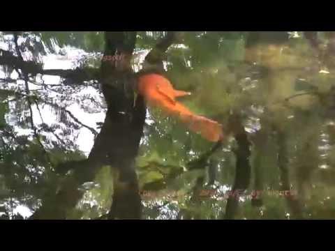 Japan Trip 2014 Tokyo Carp(Koi) Mabashi park Kōenji-kita Suginami-ku