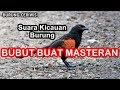 Suara Kicauan Burung Bubut Buat Masteran Pikat Pacingan Isian Suara Jernih Ngriwik(.mp3 .mp4) Mp3 - Mp4 Download