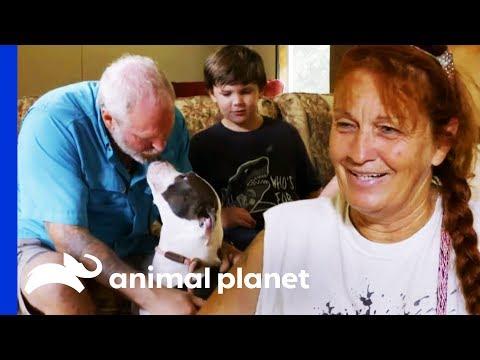 Family Makes A Tough Decision About Adopting A Dog | Pit Bulls & Parolees