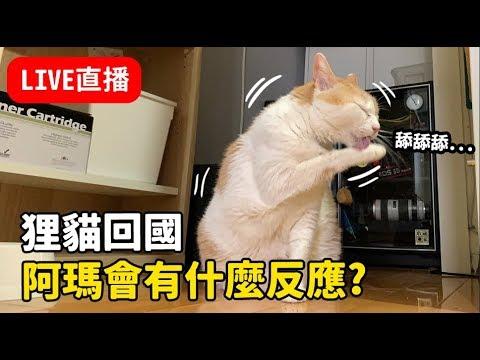 黃阿瑪的直播-狸貓出國回來-貓咪會有什麼反應呢