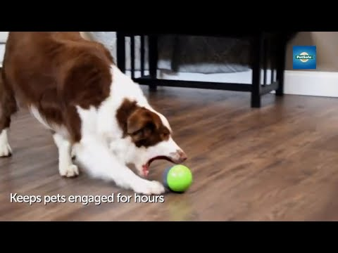 hide-and-squeak-dog-toys---the-petsafe®-ricochet