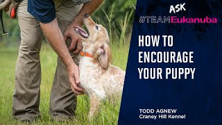 How To Encourage Your Puppy