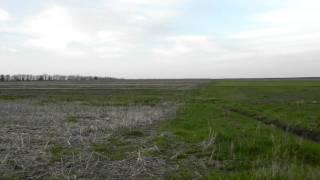 Работа выжлы (венгерской легавой) по зайцу
