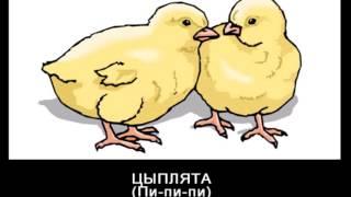 Звуки животных и птиц.Для детей