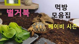 [별거북]시즌1 베이비 #.10먹방모음집(Mukbang…