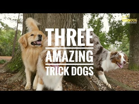 Three Amazing Trick Dogs