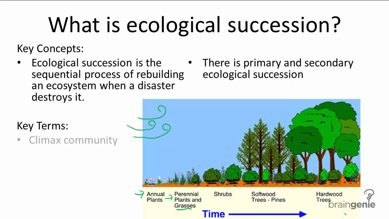 The principles of biology are used daily in the areas of health, hygiene and food preparation, among others. 16.1.4 What is ecological succession - YouTube