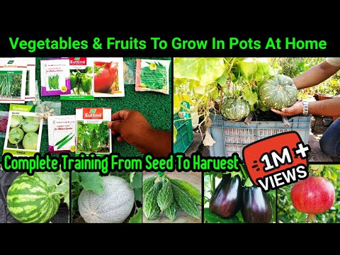 April Vegetables To Grow In pot ~ Full Updates From Seed To Harvest ~Summer Veggies Fruits And Herbs