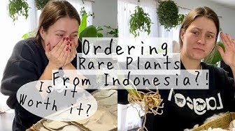 Ordering & Unboxing RARE Houseplants from GREENSPACES.ID | Inexpensive Rare Houseplants Online!?