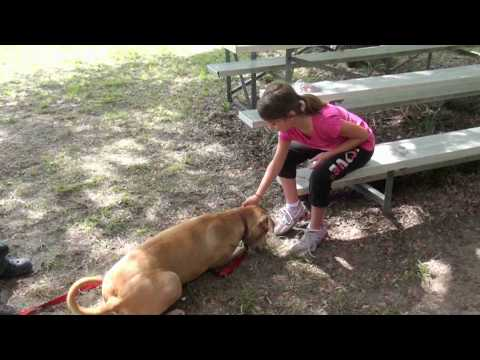 Central Brevard Humane Society Dog Days of Summer Camp