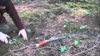 Oregon white truffle mushroom hunting