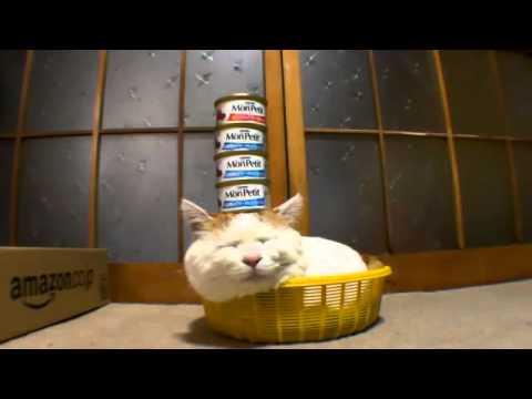 Cười chảy nước mắt  với 14 clip mèo siêu  făn nỳ    Lạ&Fun   Kênh14 vn 12