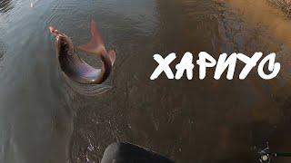 Рыбалка на хариуса осенью Ловля хариуса на червя Рыбалка на горной реке