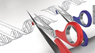 Gene Editing Tool CRISPR Is Making Scientists Face The Hard Questions - Newsy