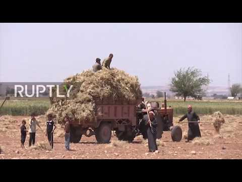 Syria: Farmers outside Aleppo harvest first wheat crop since area's liberation