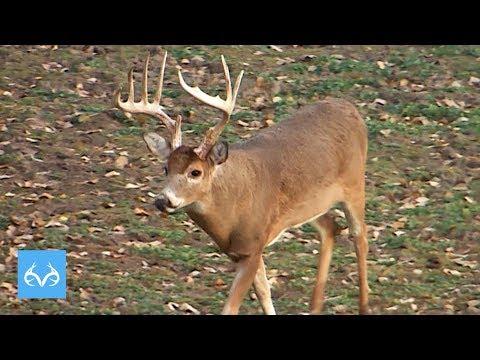 Busted Up Kansas Brute | Ben McDonald Bow Hunts | Monster Bucks Monday