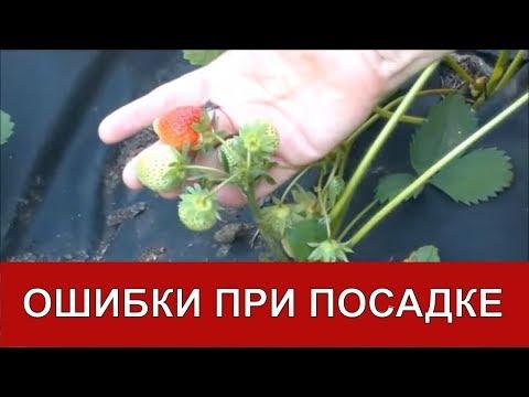Биопрепараты в природном земледелии - Сияние - центр