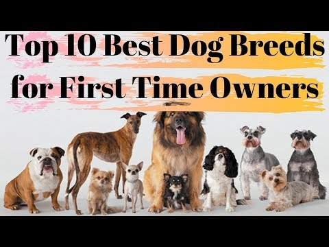 Top 10 Best Dog Breeds for First Time Owners With Price | Watch | Now |