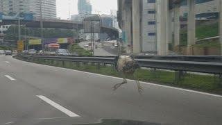マレーシアの首都クアラルンプール中心部の高速道路で16日午後、多数...