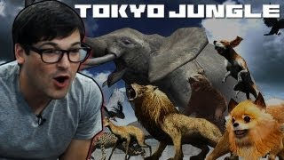 Let's Play Tokyo Jungle! Post-Apocalyptic Pomeranian Gameplay!
