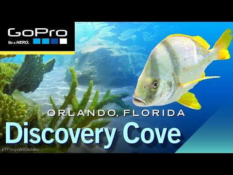 A Day At Discovery Cove Orlando - GoPro Hero 4 HD