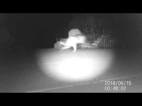 cat escapes fox trap
