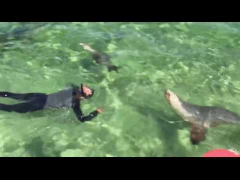 Baird Bay Tour - Swimming with Dolphins and Seals