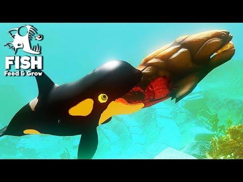 FEED E GROW FISH #48 = BALEIA ORCA E SEUS FILHOTES