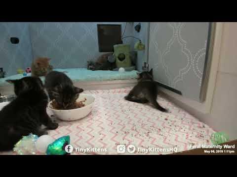 tiny-ferocious-kitten,-watch-out!-tinykittens.com