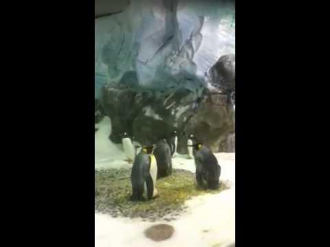 Artificial Antarctic