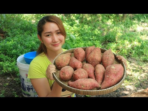 Yummy Sweet Potato Cooking With Palm Sugar – Sweet Potato dessert – Cooking With Sros