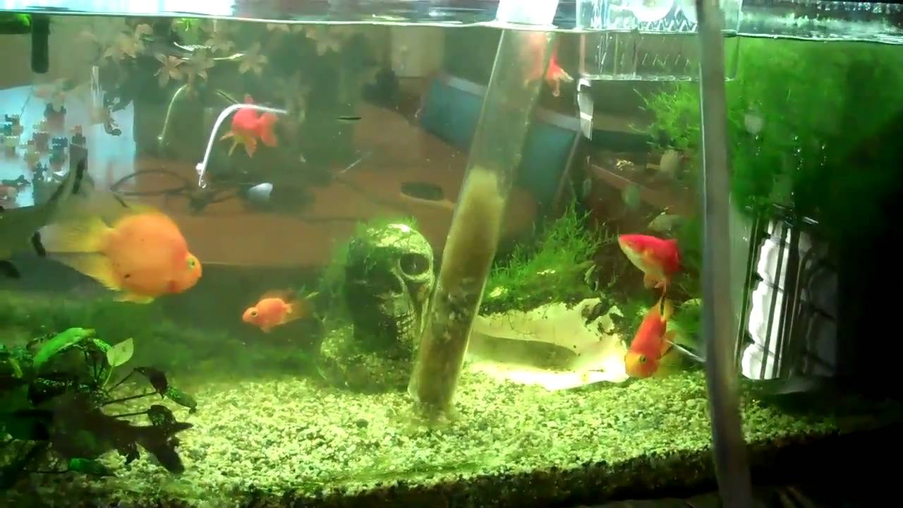 Fish aquarium olx delhi - Fish Tank Water Change Aquarium Fish Care Part 1