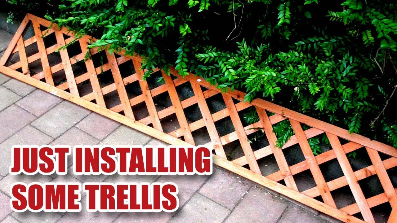 I M Just Fitting Some Garden Trellis To A Wall 9 Youtube