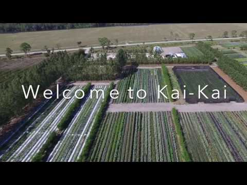 Free Farm Tours at Kai-Kai Farm near Indiantown, Palm City, Stuart, FL