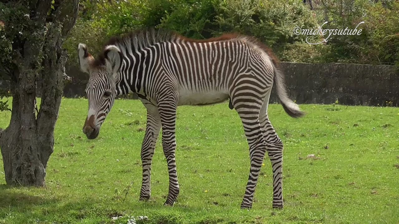Cute Zebra Names
