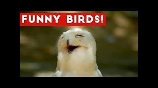 Смешной попугай - Сборник видео птиц - Смешные видео для домашних животныхnull