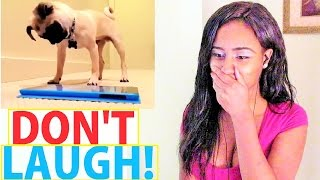 try not to laugh challenge kids dogs kiki pepper reaction funny