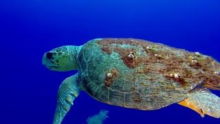 Diving Grand Cayman with Living the Dream Divers May 2015...1080p HD