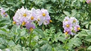 Bee and Garden Updates 9-1-16