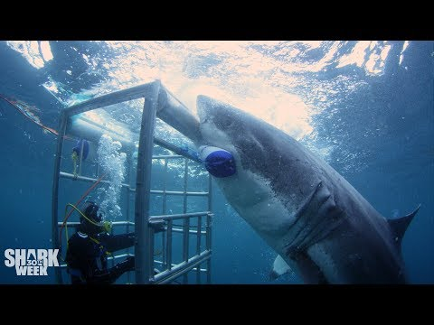 The Boldest Bites | Shark Week's Most Intense Encounters